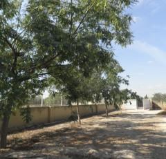 Ref. 63 Finca de olivos y frutales en Muchamiel